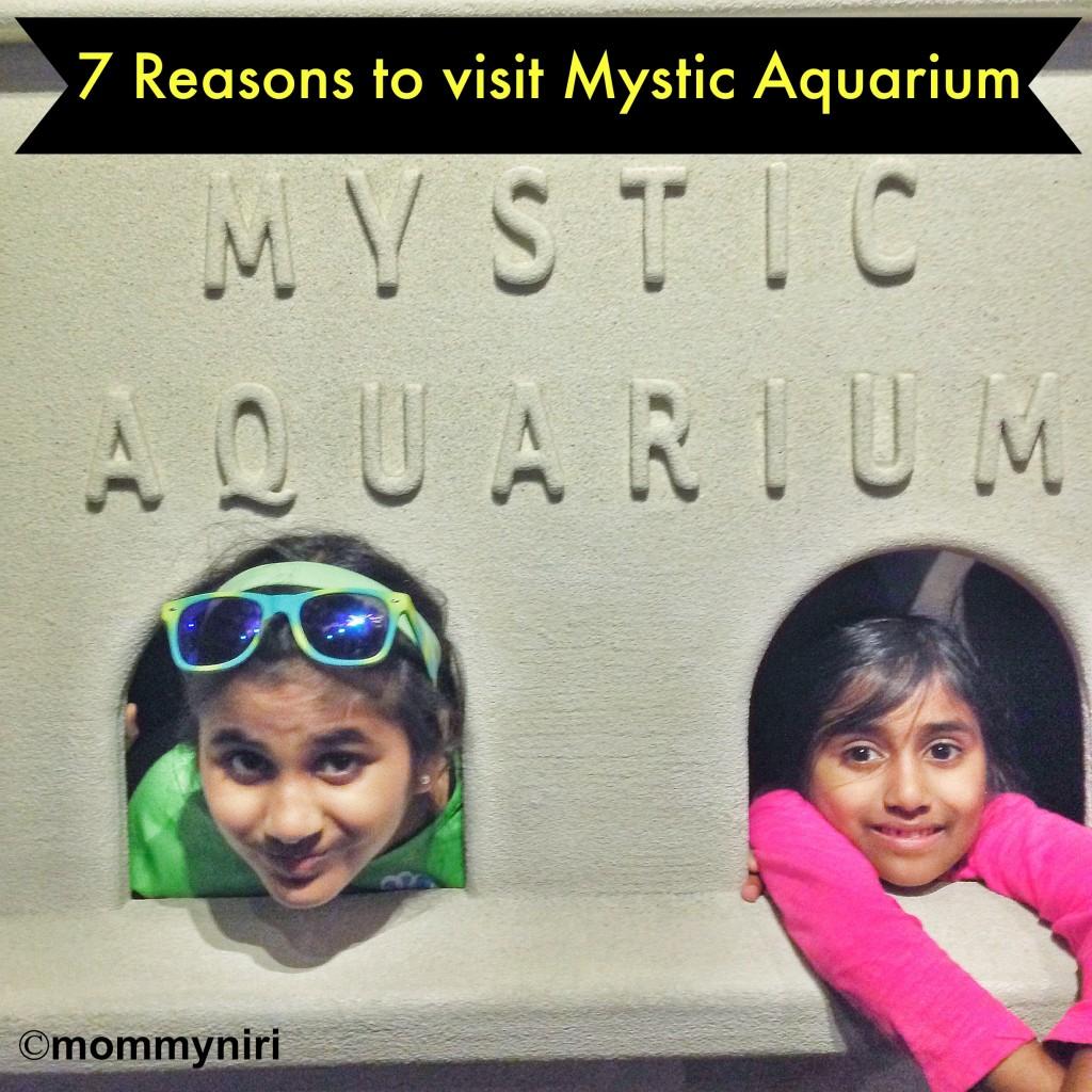 7 Reasons To Visit Mystic Aquarium In Ct Win 4 Tickets